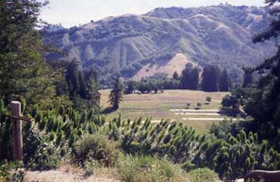 Ventana Mountains
