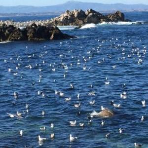 Pacific Grove CA